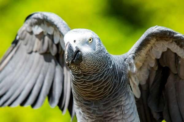 Konusan Papaganin Takipcileri Her Gecen Gun Artiyor
